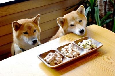 テーブルの上のご飯と2頭の柴犬