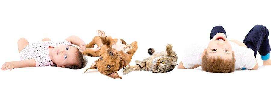 寝転ぶ赤ちゃんと犬と猫と男の子