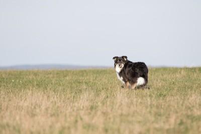 草むらの中、振り返る犬