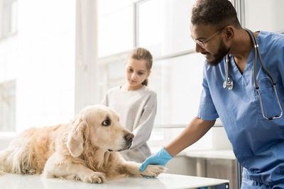 病院で獣医師の診察を受ける犬