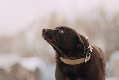耳を倒し不安げに見つめる犬