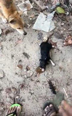 小犬を囲む人と犬