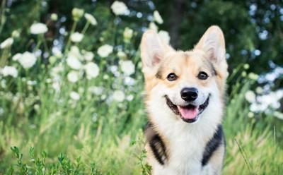 外で楽しそうな表情をしている犬