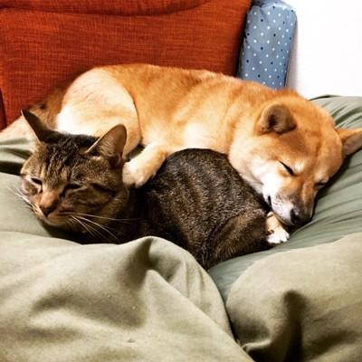 体を合わせて眠る犬と猫