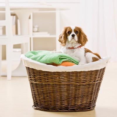 カゴの中にタオルと一緒に入っている犬