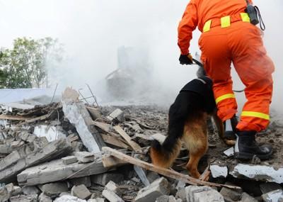 瓦礫の中を歩く救助犬「