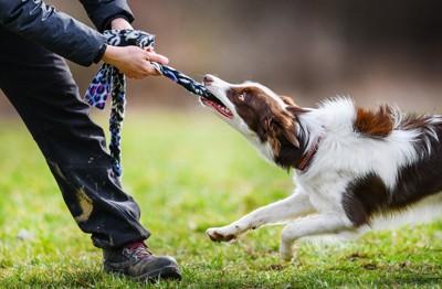 ロープを引く犬