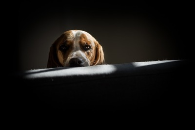 暗闇からこちらを見つめる犬
