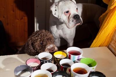 犬とお茶1