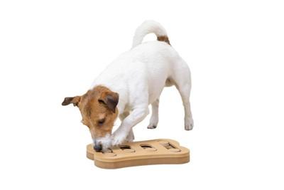 おもちゃで嗅覚トレーニングをする犬