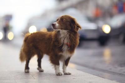 町中に脱走した犬