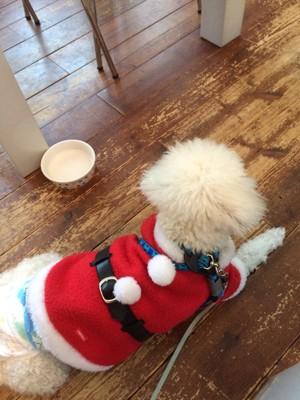 サンタのコスプレをした犬