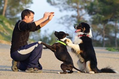 男性と2頭の犬