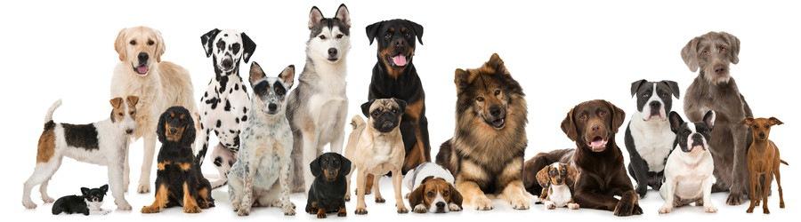 18種類の犬たち