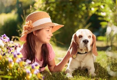 犬と貯金箱