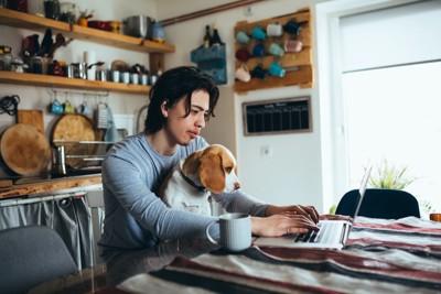 パソコン作業する男性の膝に座る犬