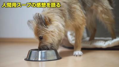 食べるワンちゃん