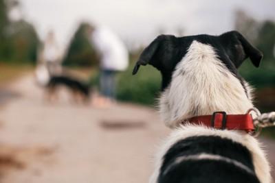 他の犬と人を見つめる犬の後ろ姿