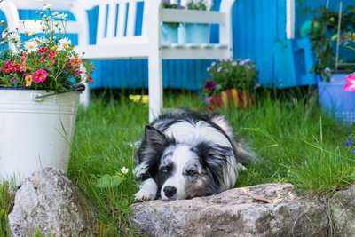 椅子の下で休む犬
