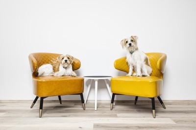 椅子に乗る2匹の犬