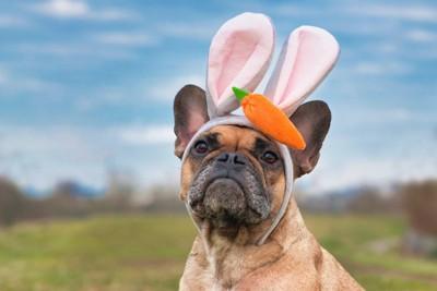 ニンジンの飾りがついたウサ耳を付けた犬