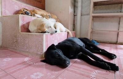 段差で寝る犬たち