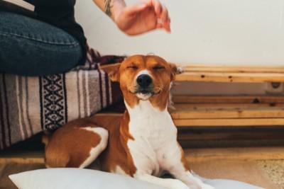 撫でられそうで目を閉じる犬