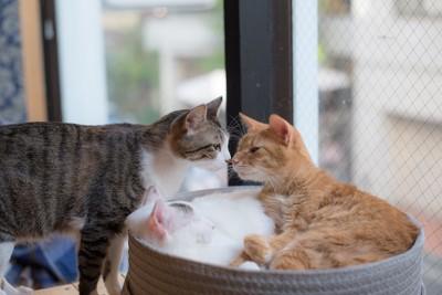 鼻を寄せ合う2匹の猫