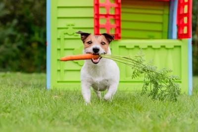 ニンジンを咥えながらこちらに向かってきている犬
