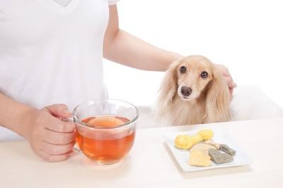 犬と食事中