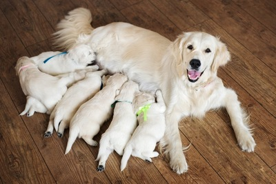 お乳をあげる母犬