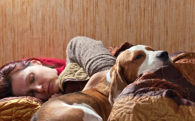 ベッドで眠る犬と飼い主