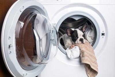 洗濯機に入る犬