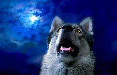 真夜中の犬