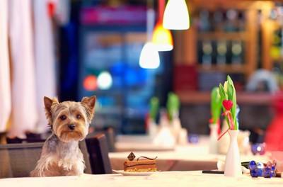 カフェの椅子に座る犬