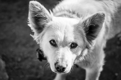 見上げてくる犬、モノクロ写真