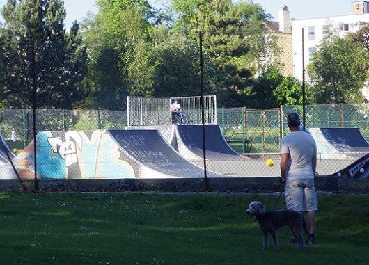 公園を散歩中の飼い主と犬