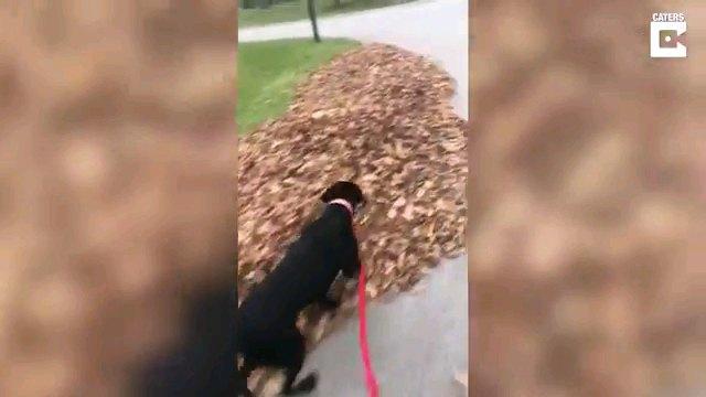 落ち葉をみる犬