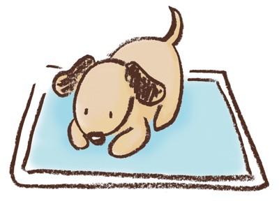 ペットシーツの上に座る犬