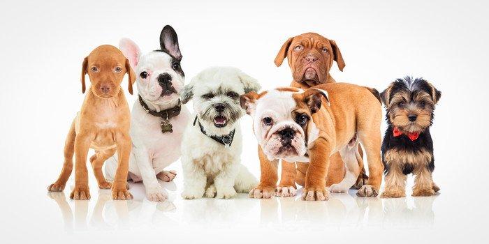 いろいろな犬種の子犬