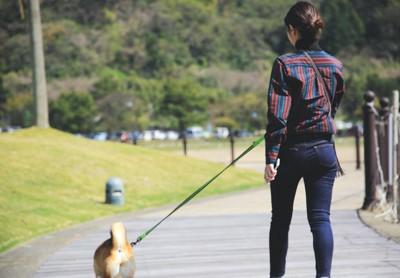 散歩中の女性と犬の後ろ姿