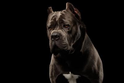 黒い背景と犬