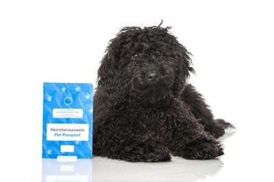 パスポートを持っている黒い犬