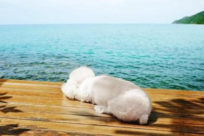 日光浴する犬の背中