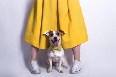 スカートの女性と犬