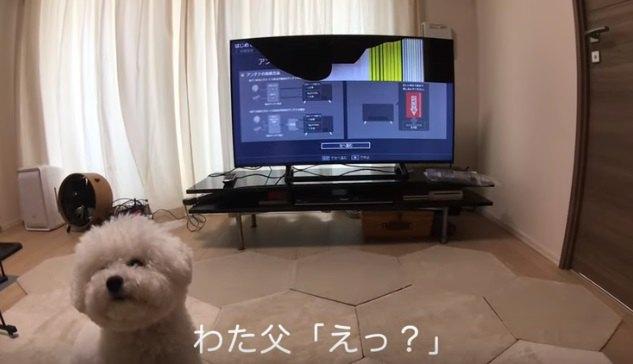 テレビを見るわたまるくん