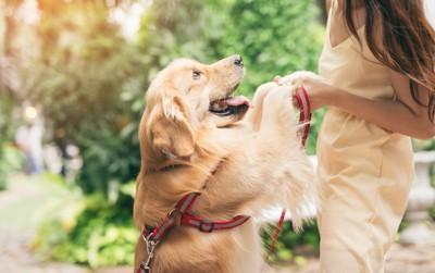 立ち上がって飼い主と手を繋ぐ犬