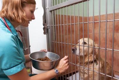入院中の犬に餌をあげる動物看護師
