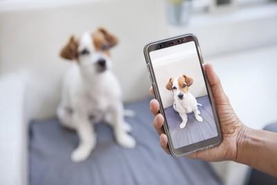 スマホで写真を撮られる犬