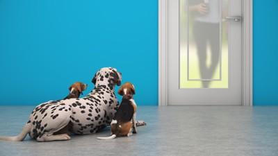 青い壁の玄関と3匹の犬